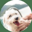 Testamento online para mascotas